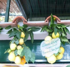 limoni citron de capri