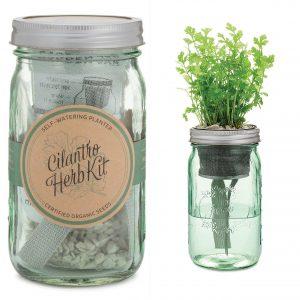 cilantro-herb-kit-2