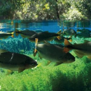 activités genève printemps aquarium aquatis lausanne