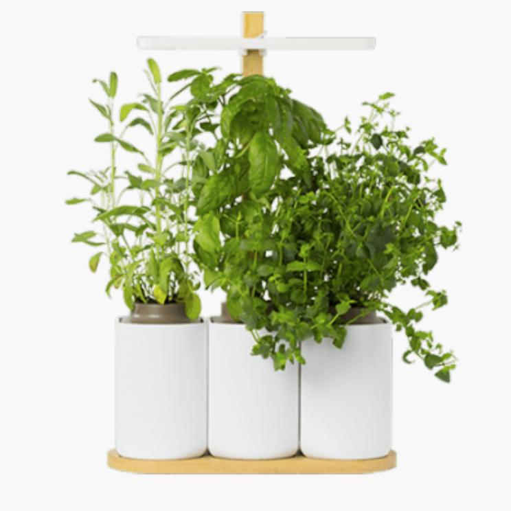 gen ve printemps les envies du colibry potager d 39 interieur lilo le colibry. Black Bedroom Furniture Sets. Home Design Ideas