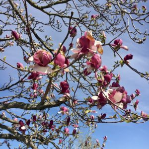 spring Chill playlist by le colibry blog geneve