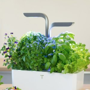 potager d'interieur veritable le colibry blog lifestyle paris geneve eco chic
